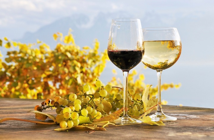 Twho glasses of wine and bunch of grapes. Lavaux region, Switzerland